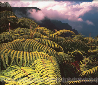 Ferns on the Na Pali Coast